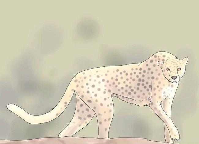 Titel afbeelding Survive Cheetah Attack Step 2