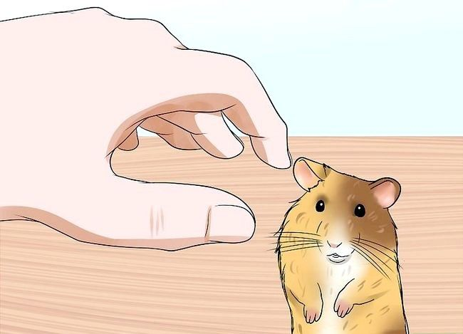 Titel afbeelding Handle a Hamster Without At Bitten Step 12