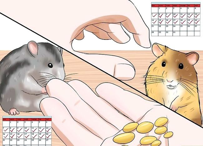 Titel afbeelding Handle a Hamster Without Being Bitten Step 14
