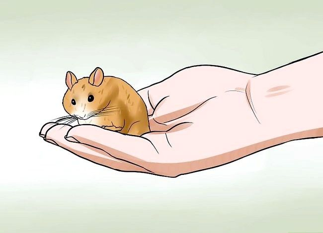 Titel afbeelding Handle a Hamster Without At Bitten Step 15