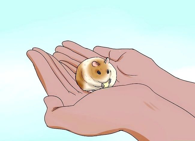 Titel afbeelding Handle a Hamster Without Being Bitten Step 4