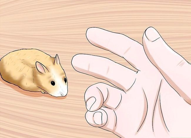 Titel afbeelding Handle a Hamster Without Being Bitten Step 8
