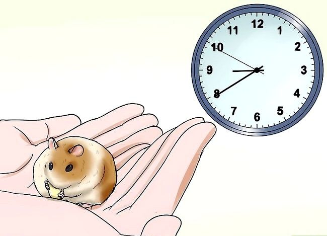 Titel afbeelding Handle a Hamster Without Being Bitten Step 9