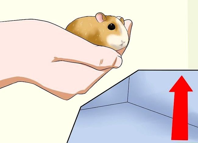 Titel afbeelding Hold a Hamster Step 11