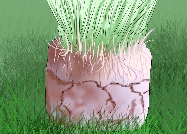 Titel afbeelding Get and Maintain a Healthy Lawn Step 16