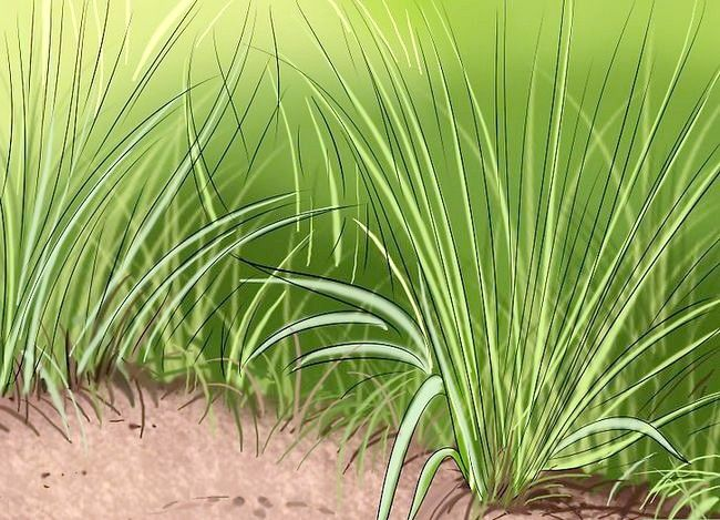Titel afbeelding Get and Maintain a Healthy Lawn Step 2