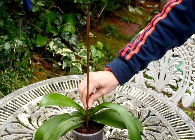 Titel afbeelding Repot an Orchid Step 6