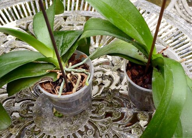 Titel afbeelding Repot an Orchid Intro