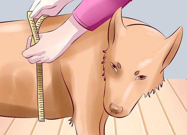 Titel afbeelding Treat Arthritis in Dogs Step 1