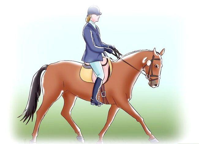 Titel afbeelding Post While draverij op een paard Stap 4