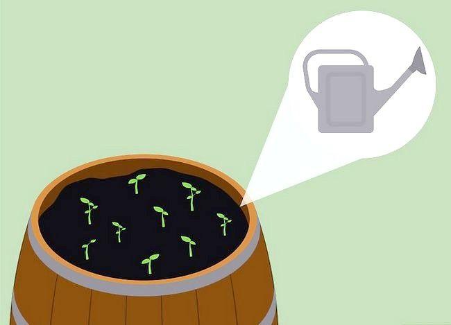 Titel afbeelding Use Wine Barrels As Planters Step 5