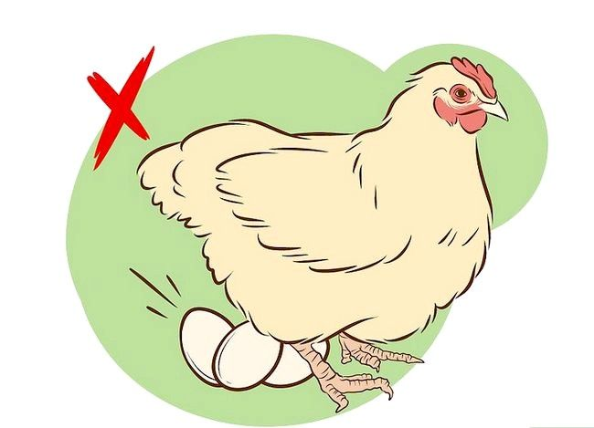 Titel afbeelding Vaccinate Chickens Step 2