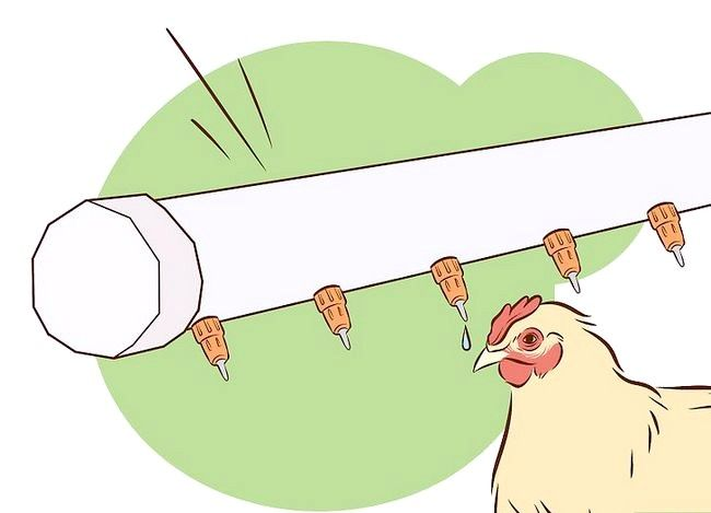 Titel afbeelding Vaccinate Chickens Step 29