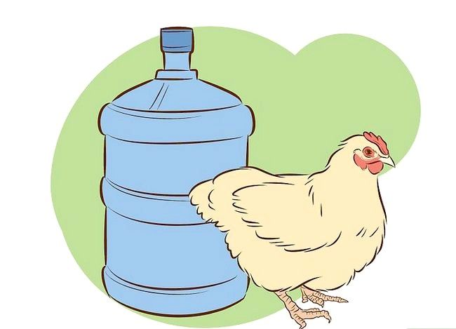 Titel afbeelding Vaccinate Chickens Step 32